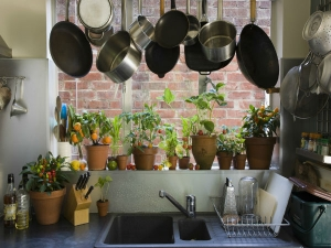 Plants That Grow From Kitchen Scrap