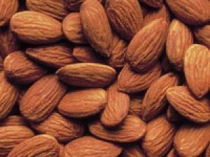 Almonds Digestive System Large