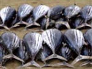 Peta Avoid Fish Eating