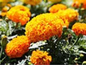 Sathya Saibaba Miracle Bhajan