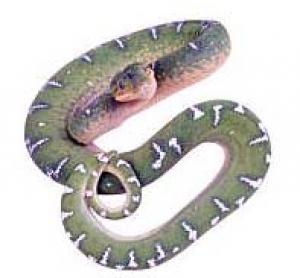 Who Website Prevent Snakebite