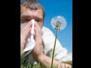 Season Allergies Cold