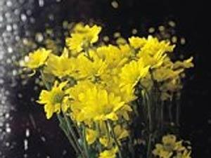 Top Monsoon Plants 100611 Aid