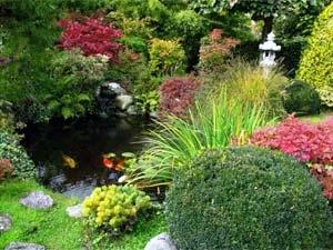 Feng Shui Green House Plants