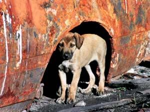 Dog Care Diwali Celebration