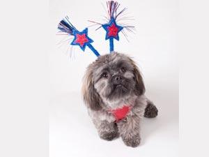 Dog Sounds Fireworks Diwali