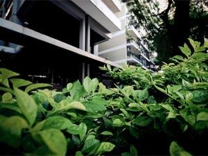 Apartment Garden Evergreen Plant