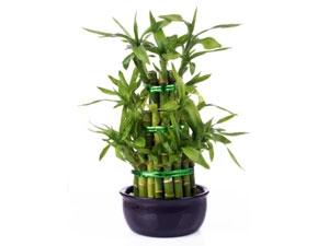 Fast Growing Plants Apartment Garden