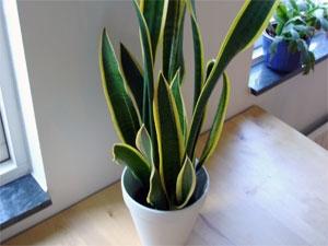 Low Light Plants Apartment Garden