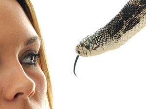 Meaning Snake Dream
