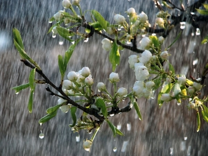 Rain Water Garden