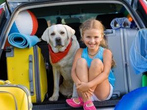 Pets Car Hot