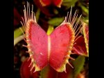 Grow Carnivorous Plants Home Part