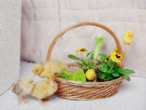 Basket Uses Home Improvement