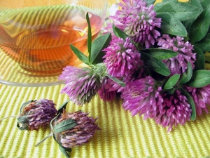 Red Clover Tea Herbal Very Beneficial