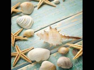 Place Sea Shells Feng Shui Style