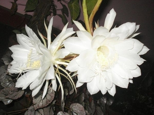 Garden flowers news garden flowers latest news on boldsky ten night blooming flowers that are white mightylinksfo