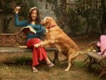 Eight Reasons Why Men Are Like Dogs