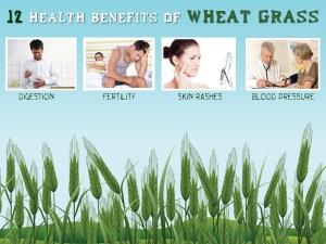 12 Health Benefits Of Wheat Grass
