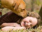 Ten Home Remedies For Dog Fleas