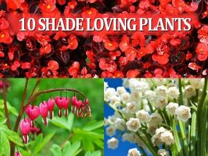 Ten Shade Loving Plants