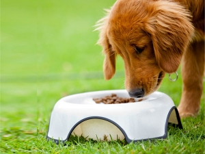 Ten Foods That Can Make Your Puppy Ill