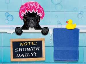 Why Is It Important To Shower Every Day