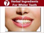 Seven Herbal Ingredients For Whiter Teeth