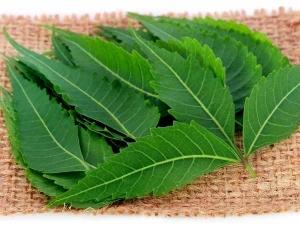 Amazing Health Benefits Of Neem Leaves