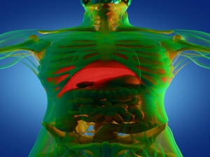 Top Diet Tips That Help With Liver Cleansing