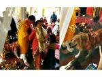 Her Dog Refused To Leave Her During The Wedding Pheras