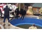 Bizarre Stories Of Animals Getting Stuck