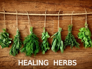 Herbs That Heal Health Issues