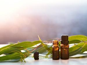 Top Health Benefits Of Eucalyptus Essential Oil