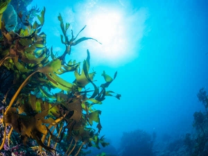 Top Health Benefits Of Seaweed And How To Consume It