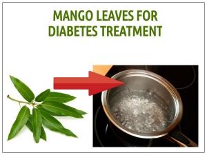 Mango Leaves For Diabetes Treatment