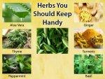 Healing Herbs You Should Keep Handy