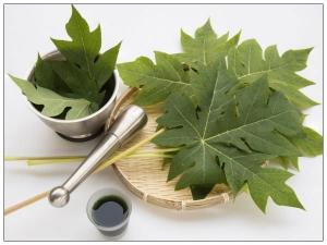 Papaya Leaf Remedy For Stomach Detox