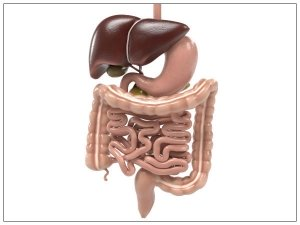 Foods That Support Digestive Health
