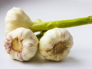 Is Sprouted Garlic Safe To Eat