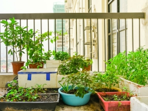 How To Grow Edible Greens At Home