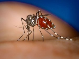 How Google Search Helps Track Dengue