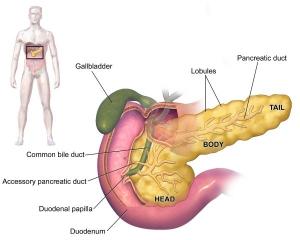 Type 1 Diabetes Cure Pec Direct Viacyte