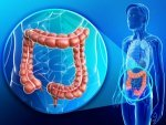 Gut Bacteria Affect Weight Loss Research