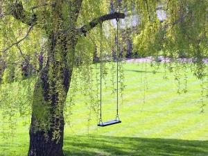 More Trees May Reduce Diarrhoeal Disease In Rural Kids Study