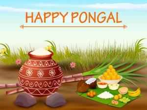 Why Is Pongal Prepared In Sankranti