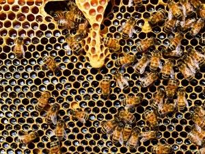 Manuka Honey Benefits Side Effects