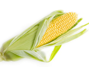 Corn Or Babycorn Which One Is Healthier For You