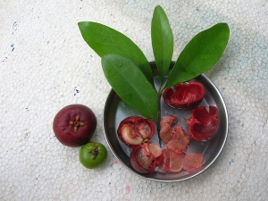 Did You Know About These Health Benefits And Side Effects Of Kokum