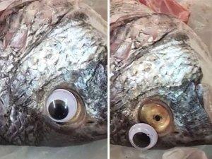 Shopkeeper Fixed Fake Eyes To Make Fish Look Fresh